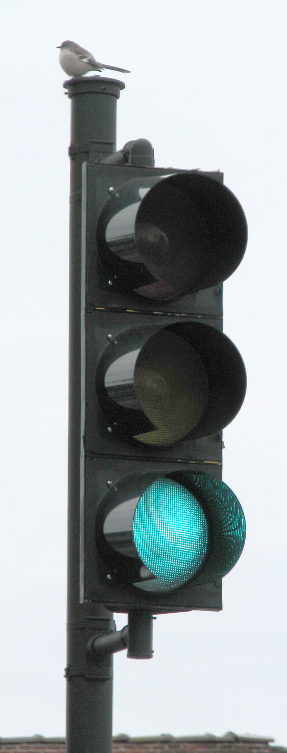 Bird on traffic sign