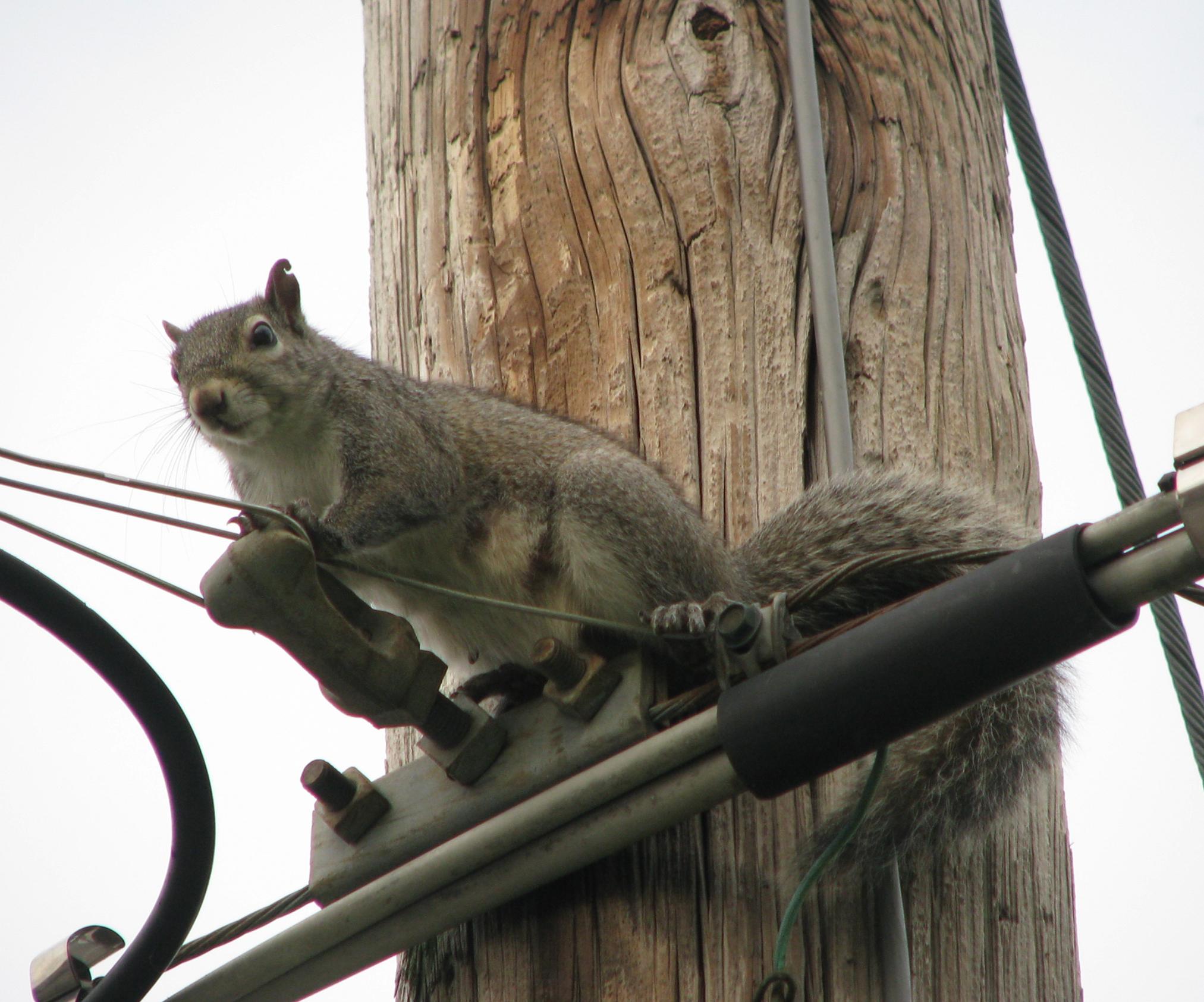 Squirrel Photos of 2017