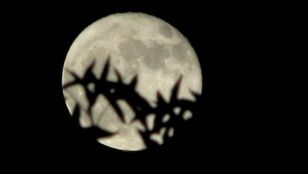 Leaves on a sweet gum tree were silhouetted by the light of the moon when this picture was taken.