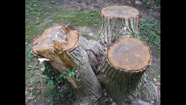 Three stumps decaying...
