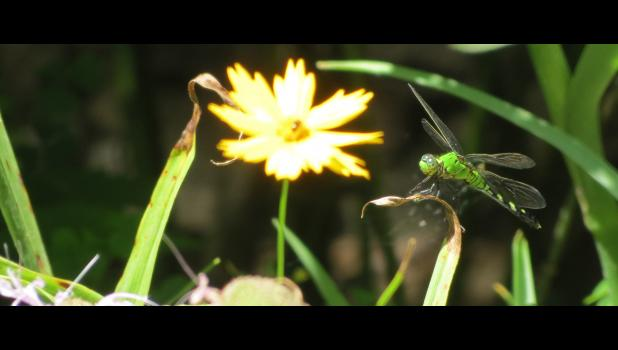 """Dragonflies probably don't have to worry much about dealing with a bureaucracy. Spending a little bit of time in their world offers at least a bit of a break from the tumult of the """"real world."""""""
