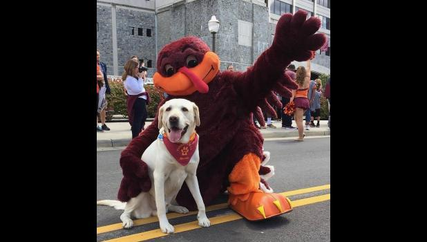 "Moose, a dog (the one on the left), is now Dr. Moose, and still a dog. Moose is a therapy dog at Virginia Tech. In the picture, Dr. Moose is with the HokieBird. HokieBird is Virginia Tech's official mascot. Guess that makes HokieBird an okee, dokee bird. By the way, did you know (I didn't, until Friday, that there's a bluegrass/American roots children's music duo from Minneapolis called the Okee Dokee Brothers? In 2012, the duo released a CD/DVD called ""Can You Canoe?"" The CD/DVD was created during a paddle"