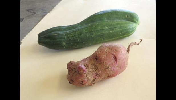 This week, we're going to start with an appetizer before the main course..a pair of cucumbers that grew together and a potato that resembles a mouse... Cheri Beegle of Cobden grew the unusual cucumber/s. Her niece, Bekkah Schemonia of Pomona, grew the potato...with ears...and a tail...in her garden.
