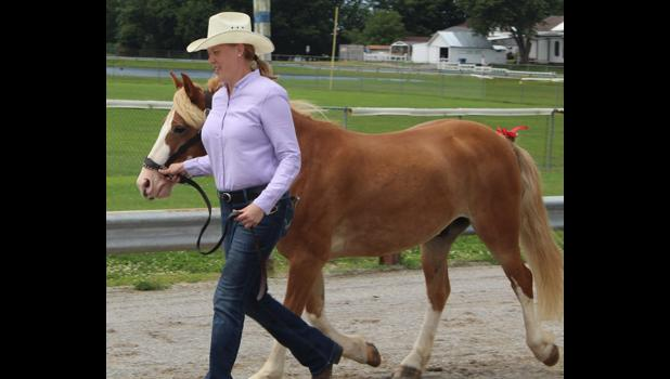 Sarah Hileman Song showed her horse at halter at the 2018 Union County Fair in Anna. Photo provided.