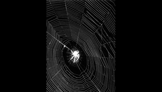 No, the spider was not a ghost, or aglow for that matter. This is just what the camera did with the creature when the picture was taken on a warm and sticky summer night.