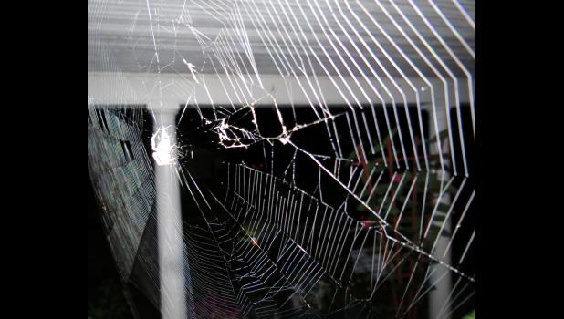 Not sure why I find spider webs so fascinating, but I do.