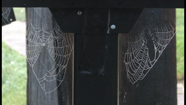 Spider webs 1 and 2 were spotted one morning recently when yours truly was heading to The Paragraph Factory.