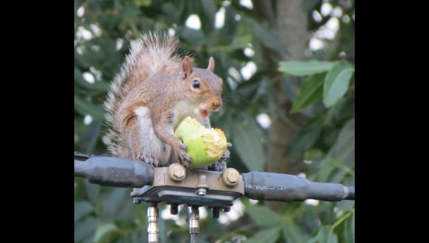 This would probably be my favorite pic of all. I don't usually run into talking squirrels while I'm out and about. This bushy-tail was munching on an apple while hanging out on a utility wire of some sort. The critter asked if wanted a bite. (In case you are wondering: No, I did not consume some of the mushrooms. Yes, I have spent way too much time in the summer heat and humidity.)
