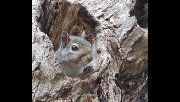 ...and this little fellow peeked out from a hole in a tree...