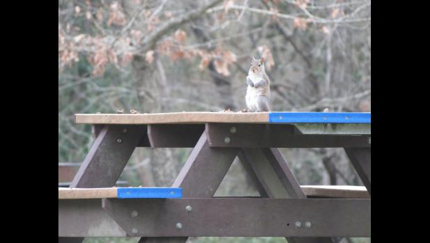 Hoping for a snack? Or, maybe, a shot at $10 million. A squirrel appeared to be ready for a picnic when it was spotted during a visit one afternoon last week to the Lincoln Memorial Picnic Grounds in Jonesboro.