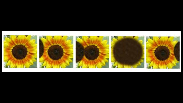 A rare and never before seen total eclipse of the sunflower unfolded last Saturday morning. These exclusive images captured the phenomonomonomon, which likely will never be seen again...Photoshop truly is a wonderful toy...um...tool...