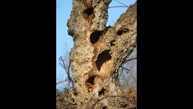 Would be interesting to know what kind of critters might have created these holes in a tree.