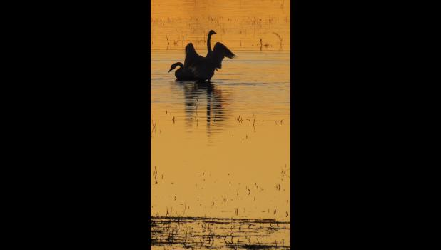 Swans? We think so. They were seen in a silhouette on December 31.