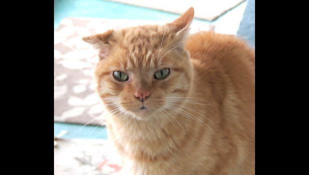 This friendly, but sometimes skittish kitty, really needs to have a forever home...